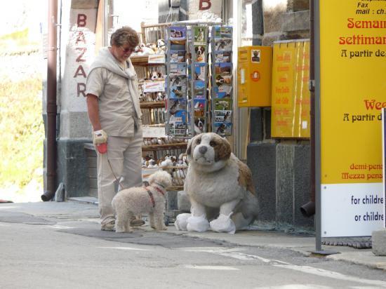 Les rencontres du st Bernard-suisse-2009
