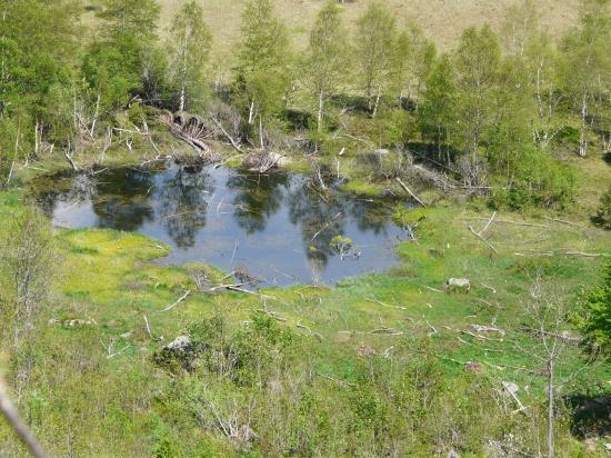 la tourbière du frankental et son résidu de lac (Hohneck-88)