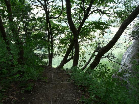 La sortie en forêt, à l' ombre !