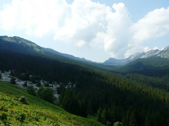 Les hauts plateaux (Chartreuse 2010)
