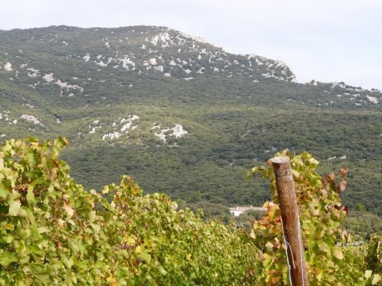 le pic St Loup deouis cazevieille