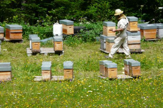 Les ruches de perquelin et son apiculteur