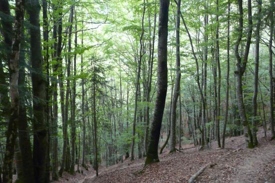 chemin d' approche en sous bois