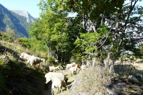 les moutons de la bergère !