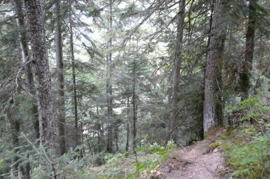 amorce du sentier de descente de la via ferrata d' arthouze à Orcières