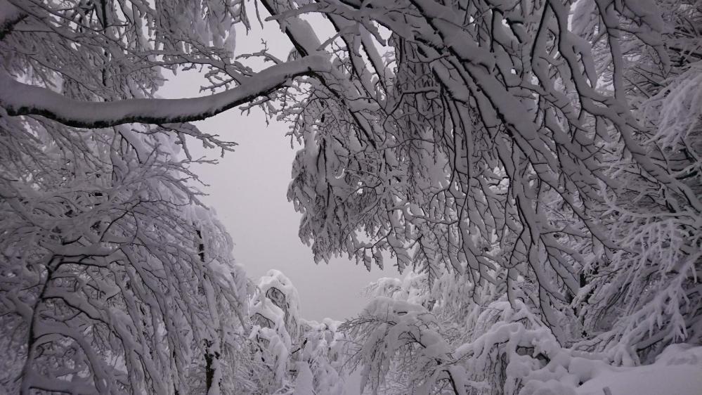 Les arbres sont chargés de neige dans la montée vers le Hohneck