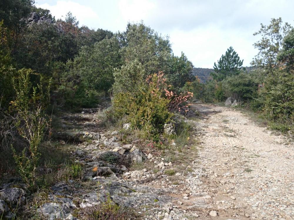 Après le retour sur la route, sentier raccourci sur la gauche (trace orange)