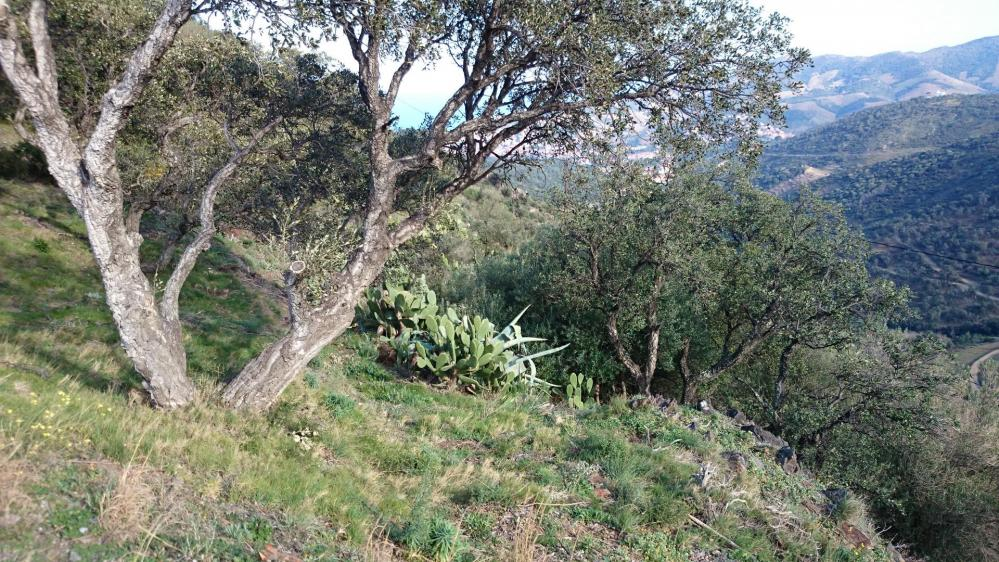 Végétation luxuriante dans la montée vers la tour de Madeloc