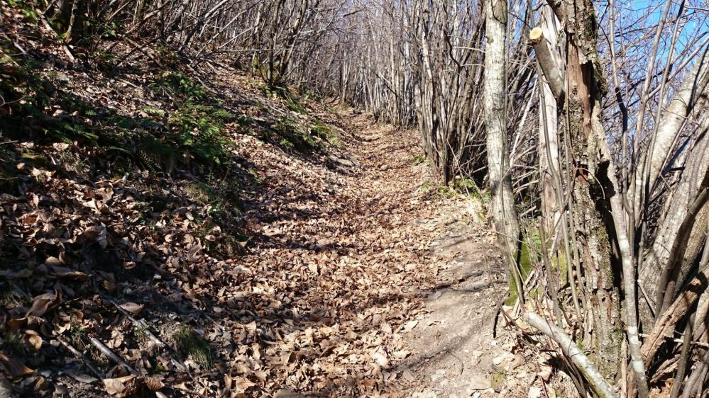Montée raide dans un sentier remplis de feuilles mortes, piégeuses !