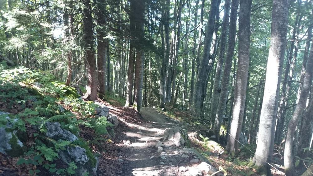 Montée en forêt dans  la montée sous la dent des Portes