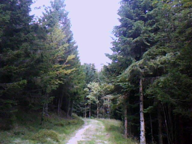 chemin forestier vers Schnupferen et seestaettle (en direction du Tanet)
