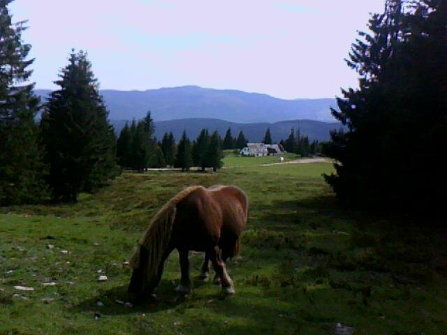 chevaux en liberté près du refuge de Schnupferen non loin du Tanet