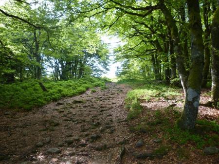 Montée d' abord en forêt vers les rochers du Tanet