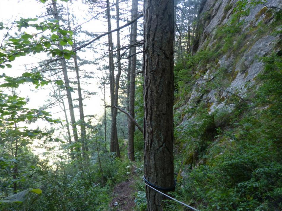 le sentier câblé qui ramène au pied du pilier de départ de la grande passerelle