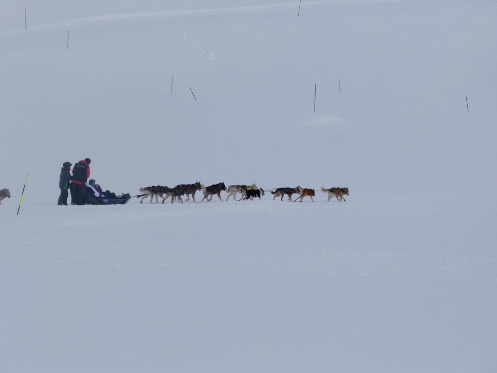 chiens de traîneau à Roche Rousse