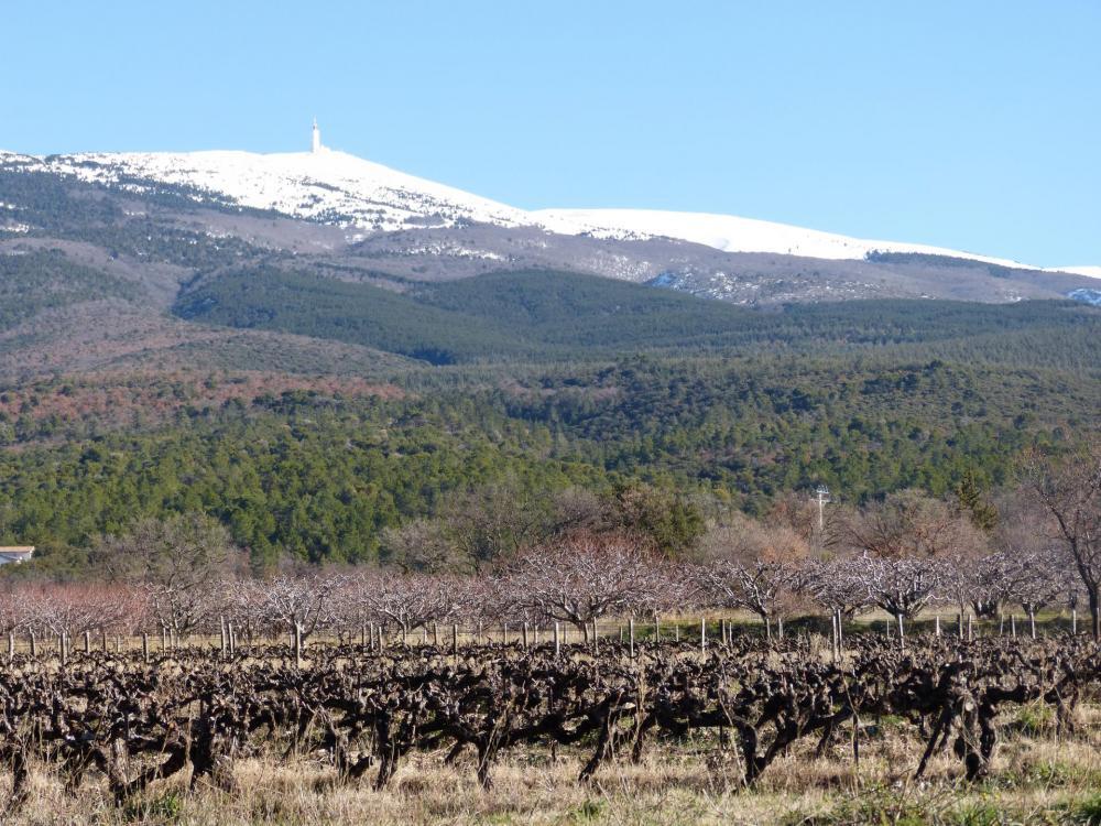 Le mont Ventoux sous sa coiffe de neige, au départ de Bédoin