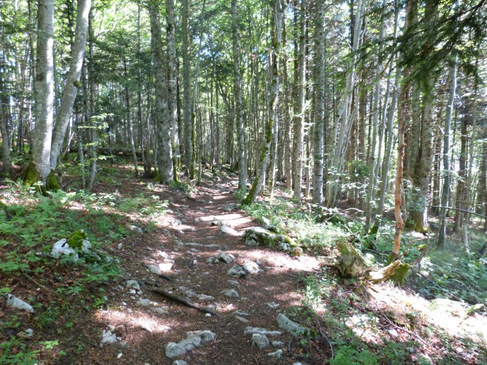 Sentier rocailleux en sous bois pour accéder au Mollard