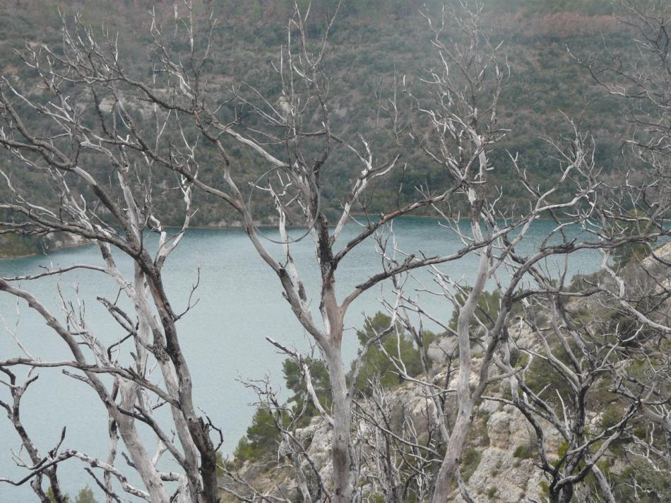 le lac d' Esparron en hiver