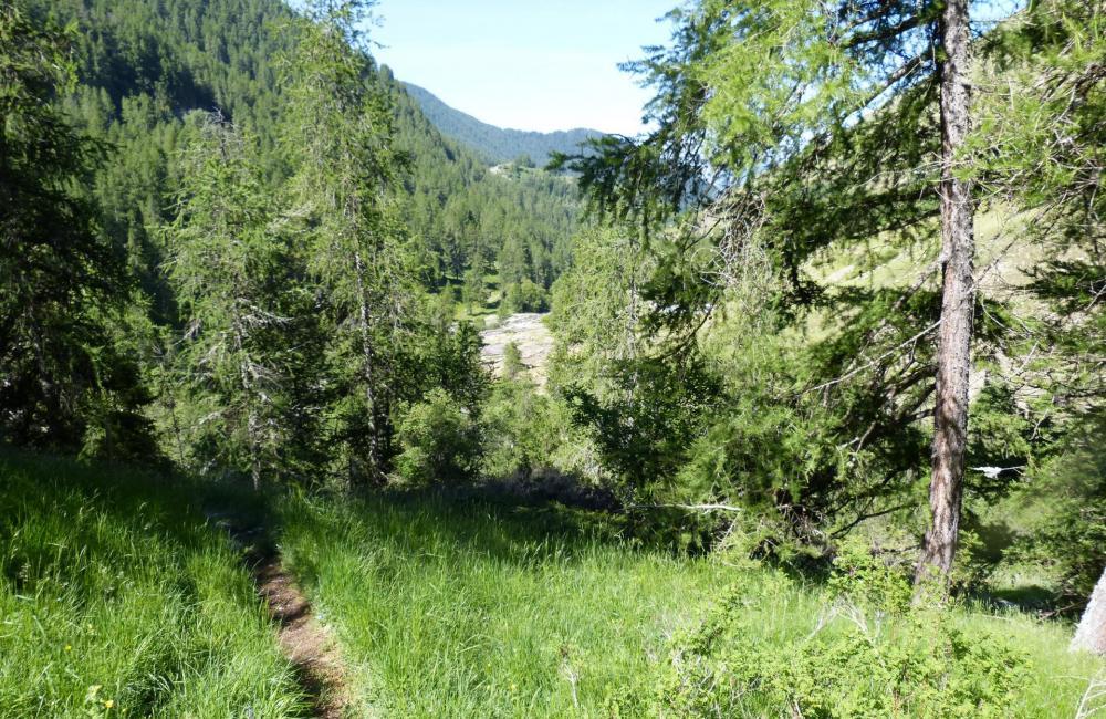 Puis un sentier en sous bois