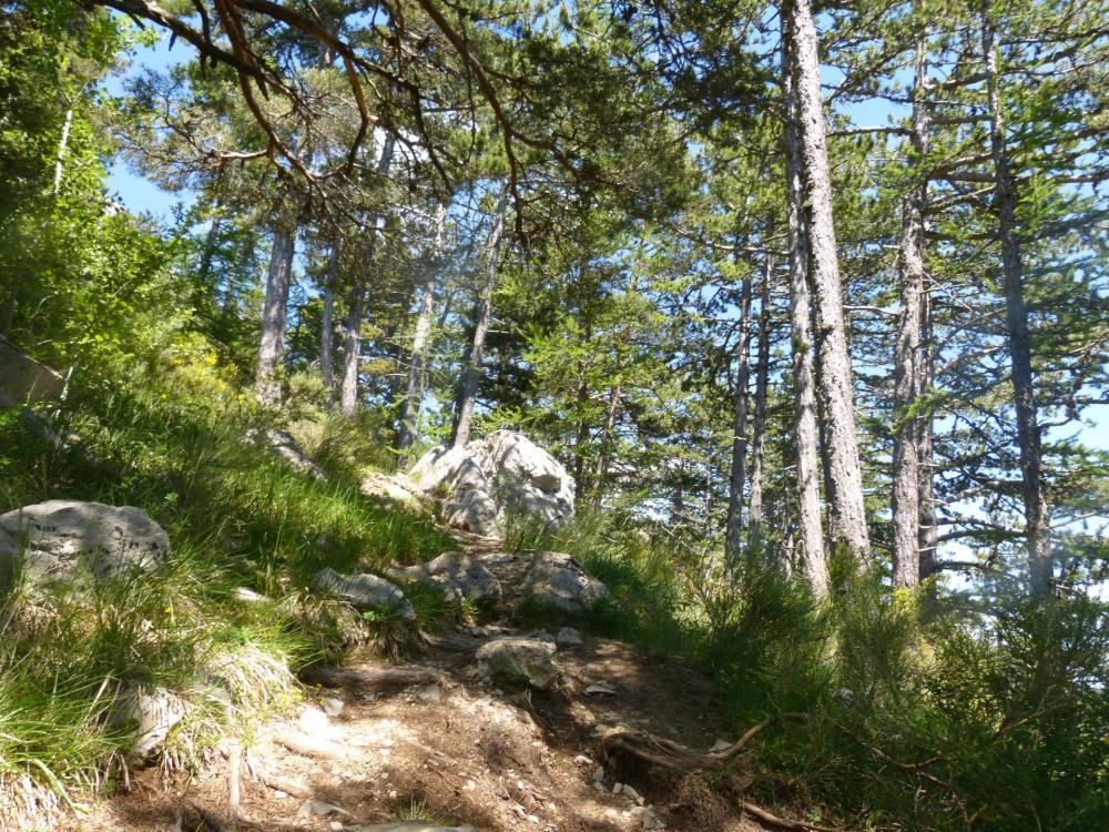 le sentier d'accès direct à la falaise de Céüze