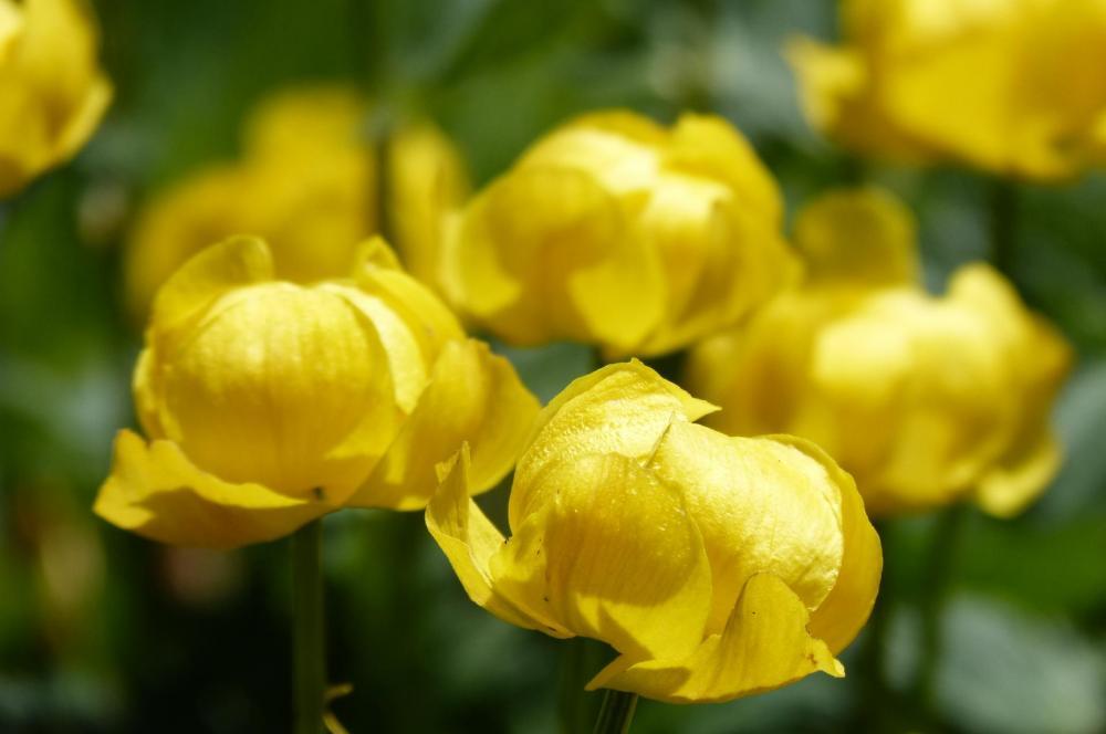 oh les belles jaunes !