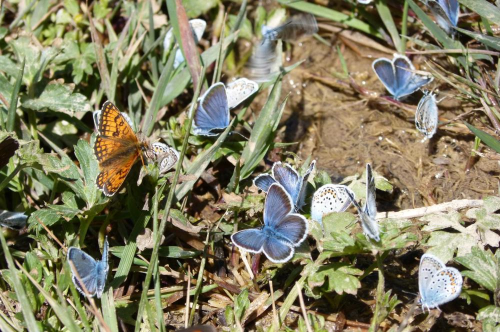 Festival de papillons au ruisseau de la Lumineuse !