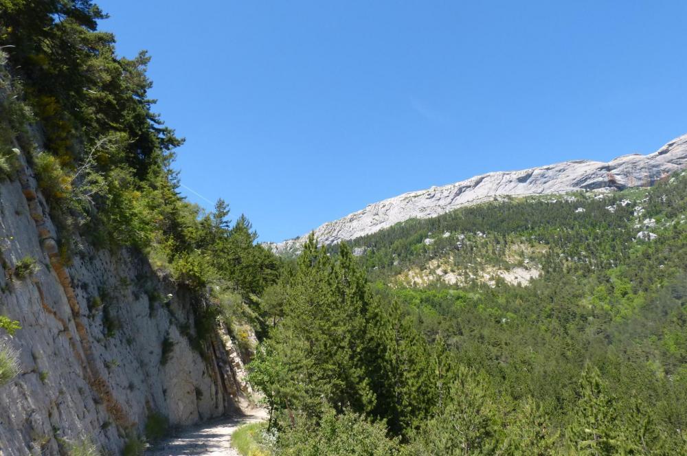 La route forestière qui ramène au col des Guérins