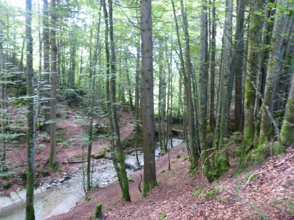 Sentier de retour des vias du Chatelard et Baume, qui passe par le petit pont pour rejoindre la sortie de la via de la cascade.