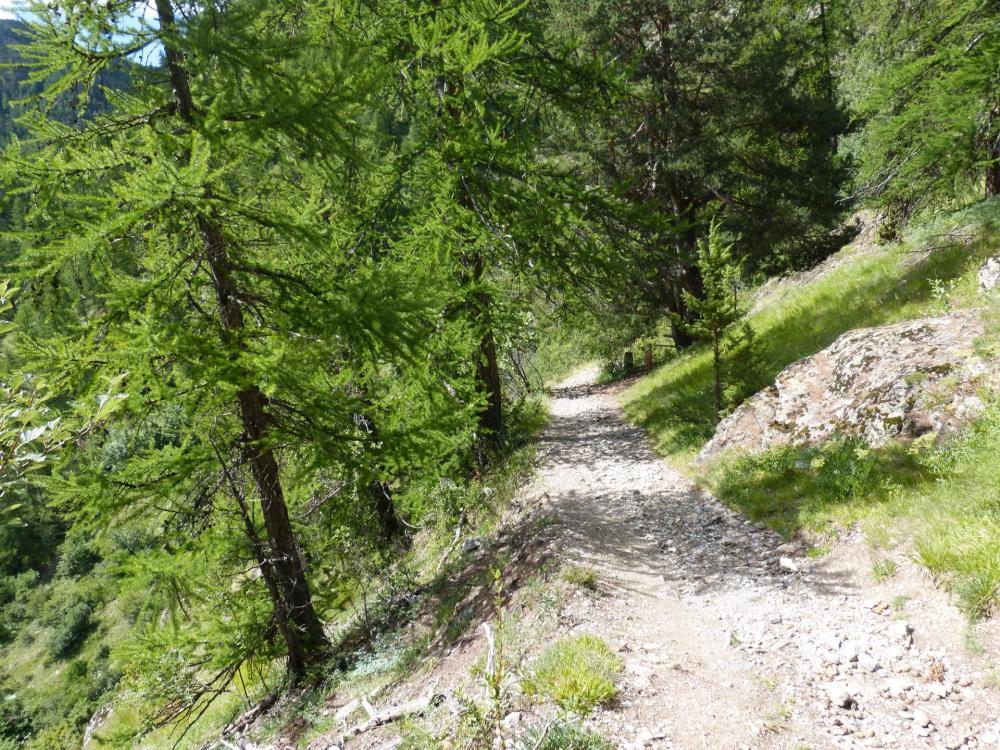 le sentier botanique qui sert de retour