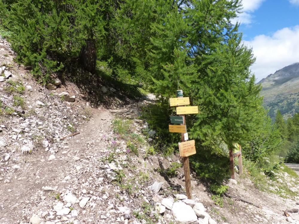Jonction du sentier botanique (retour via parcours 2) avec la piste forestière qui ramène au parking.
