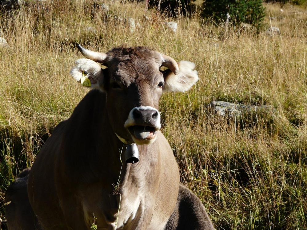 les belles habitantes de la Principauté d' Andorre