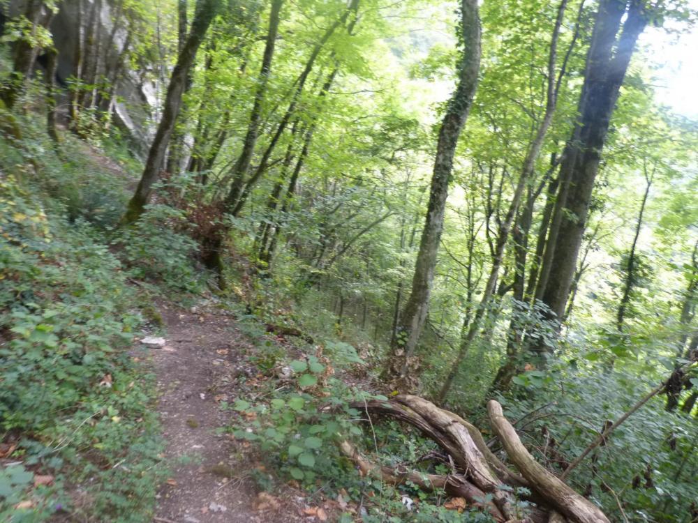 Retour en forêt par le même chemin que l' aller