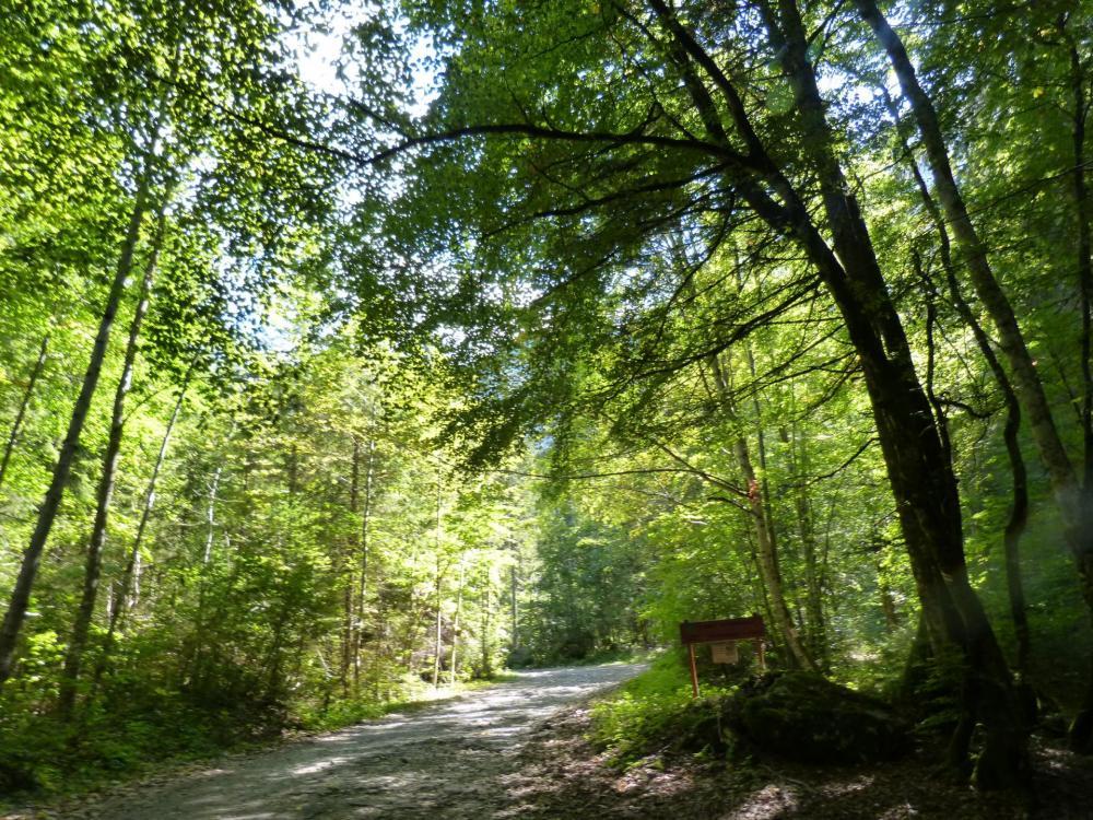 Le Granier par le pas des Barres, sentier en forêt pour commencer !