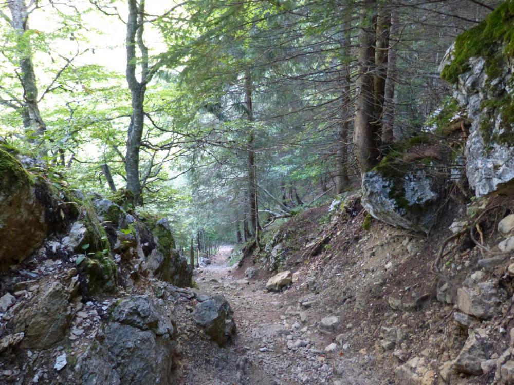 Sentier bien large et aménagé jusqu'au col de l' Alpette ... transhumance oblige ! ça n' empêche pas de forts dénivelés !