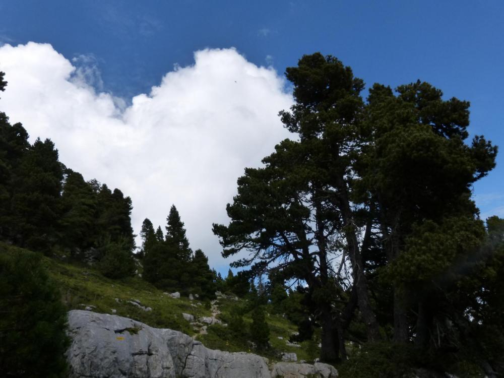Parcours agréable sur le plateau en direction du Granier et de la Croix du Granier
