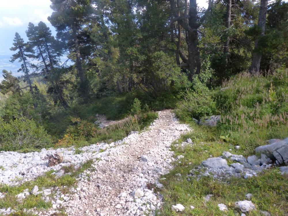 La descente continue tranquille en sous bois