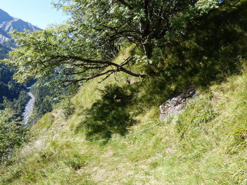 Sur le plateau boisé au dessus de la via ferrata de La Chal