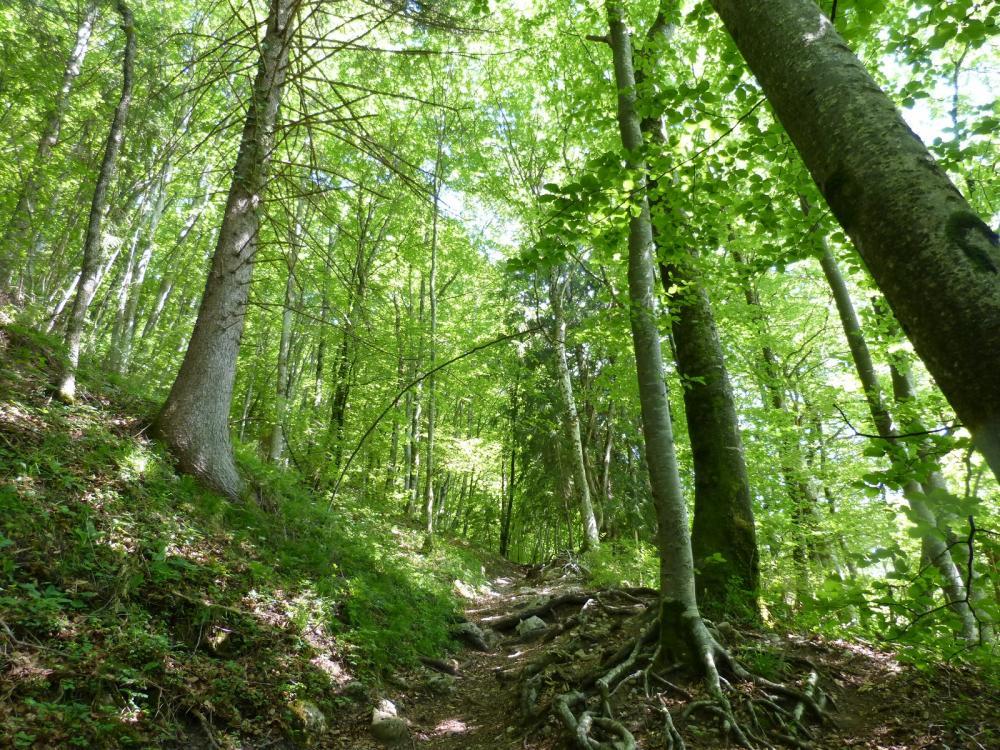 Sentier d' accès à la grotte de Bange depuis chez Martinod