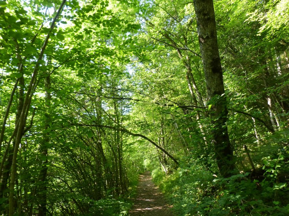 Retour de la grotte de Bange vers Allèves par la forêt
