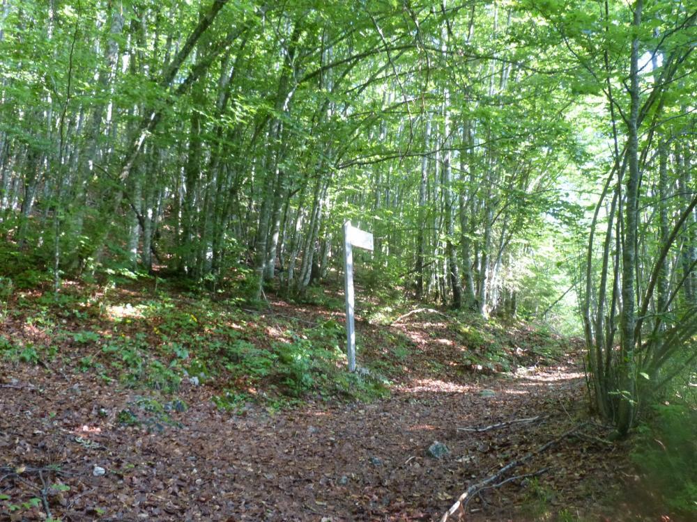 Première partie de la montée en sous bois vers la Place à Banban