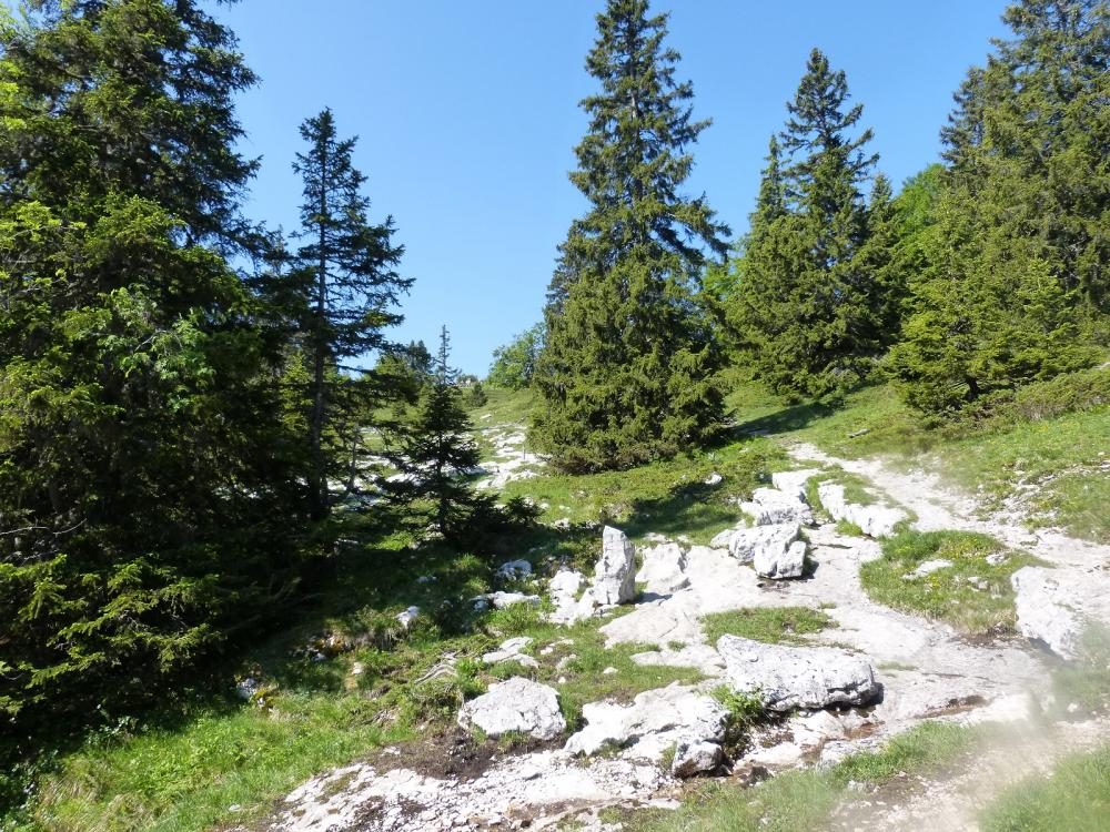 Le sentier des tannes à Aillon le Jeune, arrivée sur le Lapiaz, à découvert