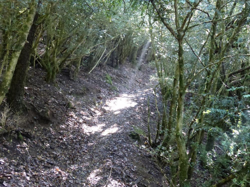 parcours en sous bois et pente plus facile à l' approche du Roc de Tormery