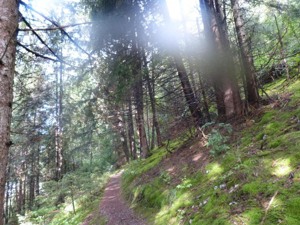 Saix de Miolène, chemin d' accès en sous bois