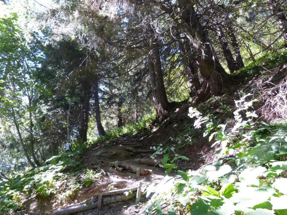 Montée en sous bois vers le col des Saulces