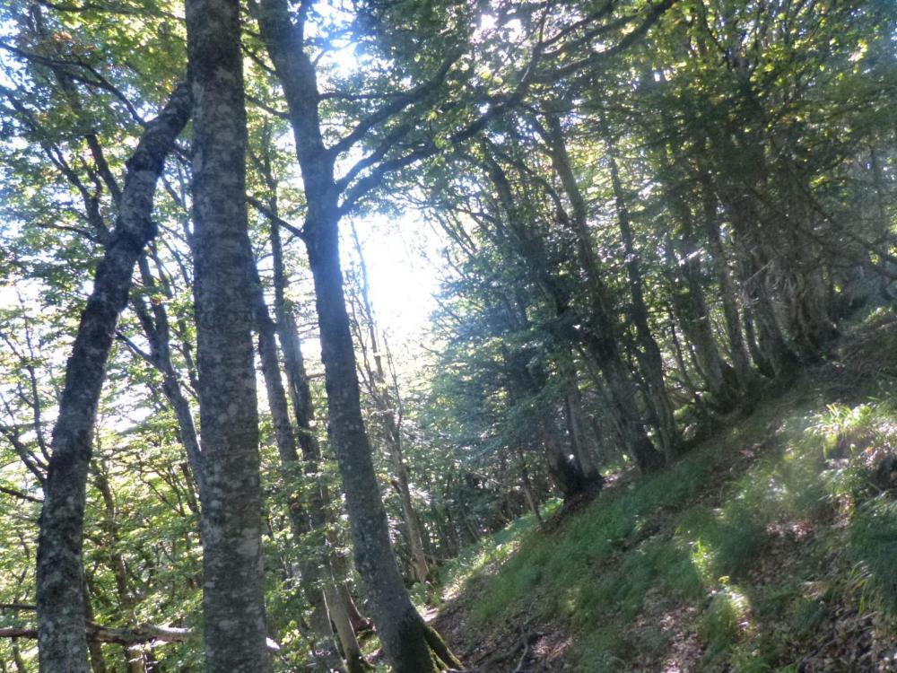 Retour à Font d' Alagnon par la forêt