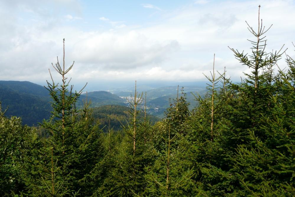 vue sur la vallée qui mène à remiremont (ballon d'Alsace)
