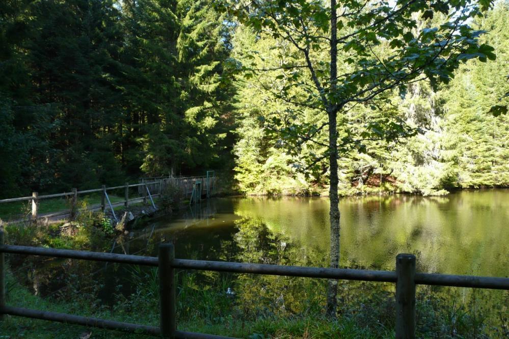 étang de Belbriette (Vosges,Xonrupt)