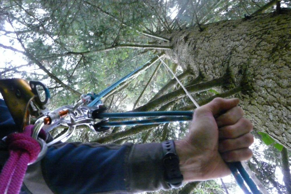 rappel sur arbre  Annecy