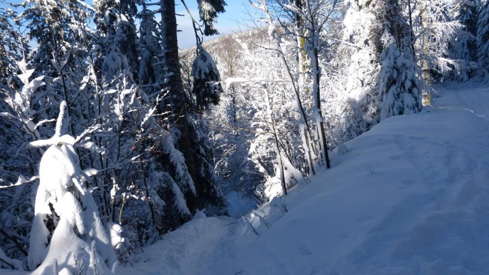 Petit raccourci en forêt pour couper les lacets de la route forestière