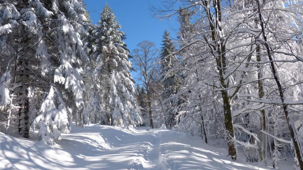Parcours facile en forêt, ambiance féerique !